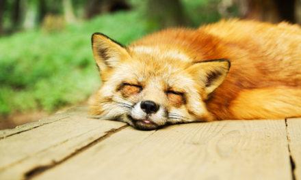 En savoir plus sur les troubles du sommeil